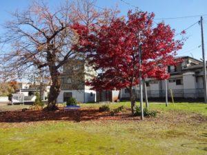 紅葉を眺める家